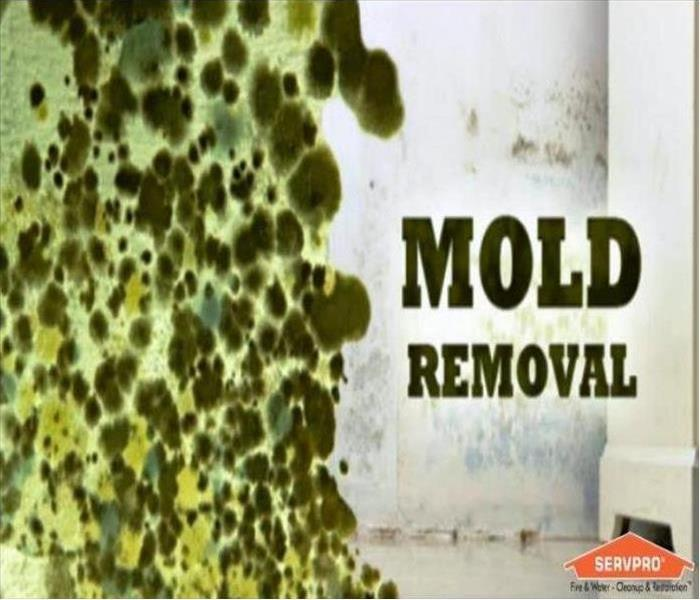 We Specialize In Mold Remediation