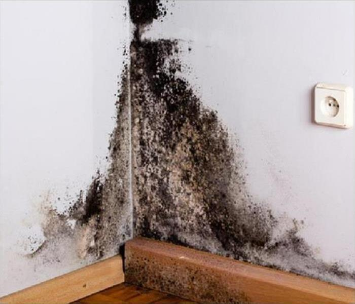 Mold Remediation Does Your Beaumont, Banning, or Desert Hot Springs Home Have A Mold Problem?