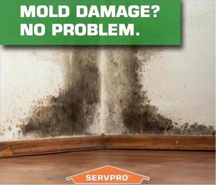 Mold Remediation Certain Things Shouldn't Be Allowed to Grow