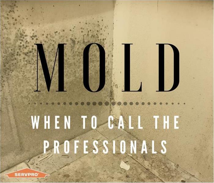 Mold Remediation The Mold Experts